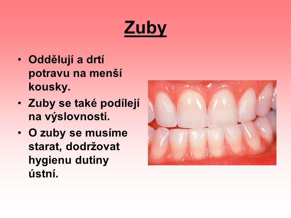 Korunku (A) Krček (B) Kořen (C) Jestliže zub rozpůlíme, vidíme, že se skládá z několika vrstev: Skloviny (D) - je nejtvrdší zubní vrstva, která pokrývá povrch zubu, chrání jej a je nejtvrdší tkání v lidském těle Zuboviny (E) - je uložena pod sklovinou, má lehce nažloutlou barvu, je pevná, ale není tak tvrdá jako sklovina Zubní dřeně (F) - obsahuje nervy a cévní zásobení zubu Cementu (G) - je tvrdý, drsný a pokrývá povrch kořene Nervů (H) - přinášejí do mozku signály bolesti, jestliže je zub napaden zubním kazem Cév - zajišťují výživu zubu a odstraňují odpadové látky Zubního lůžka (I) - zuby jsou uložené v zubním lůžku a s kostí jsou spojené drobnými závěsnými vlákny Každý zub má tři části: