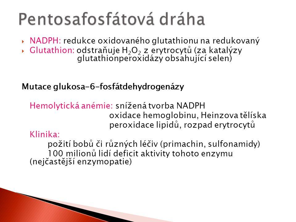  NADPH: redukce oxidovaného glutathionu na redukovaný  Glutathion: odstraňuje H 2 O 2 z erytrocytů (za katalýzy glutathionperoxidázy obsahující sele