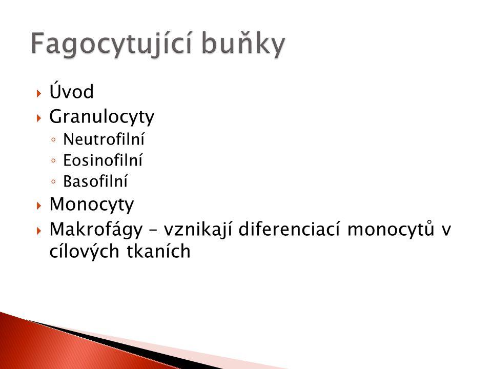  Úvod  Granulocyty ◦ Neutrofilní ◦ Eosinofilní ◦ Basofilní  Monocyty  Makrofágy – vznikají diferenciací monocytů v cílových tkaních
