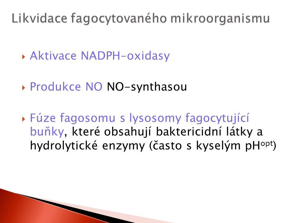  Aktivace NADPH-oxidasy  Produkce NO NO-synthasou  Fúze fagosomu s lysosomy fagocytující buňky, které obsahují baktericidní látky a hydrolytické en