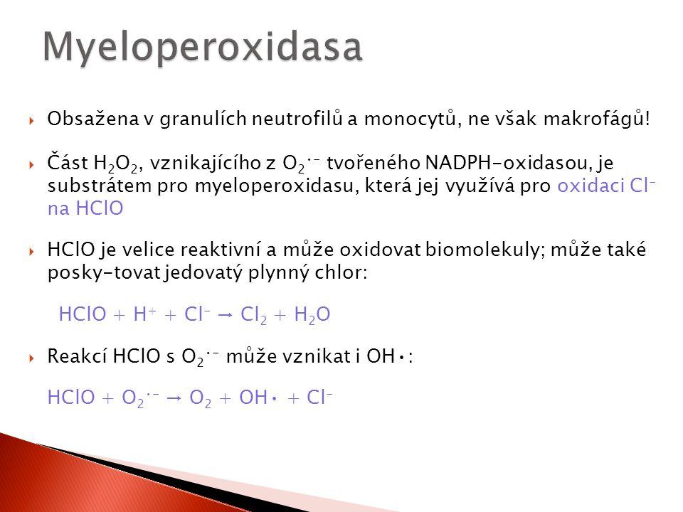  Obsažena v granulích neutrofilů a monocytů, ne však makrofágů!  Část H 2 O 2, vznikajícího z O 2 - tvořeného NADPH-oxidasou, je substrátem pro myel