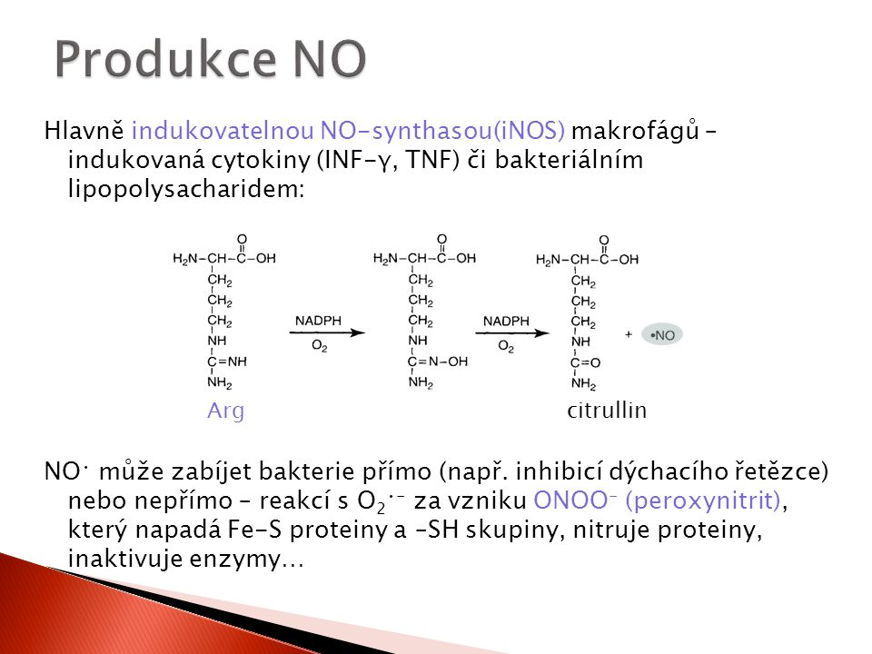 Hlavně indukovatelnou NO-synthasou(iNOS) makrofágů – indukovaná cytokiny (INF-γ, TNF) či bakteriálním lipopolysacharidem: NO může zabíjet bakterie pří