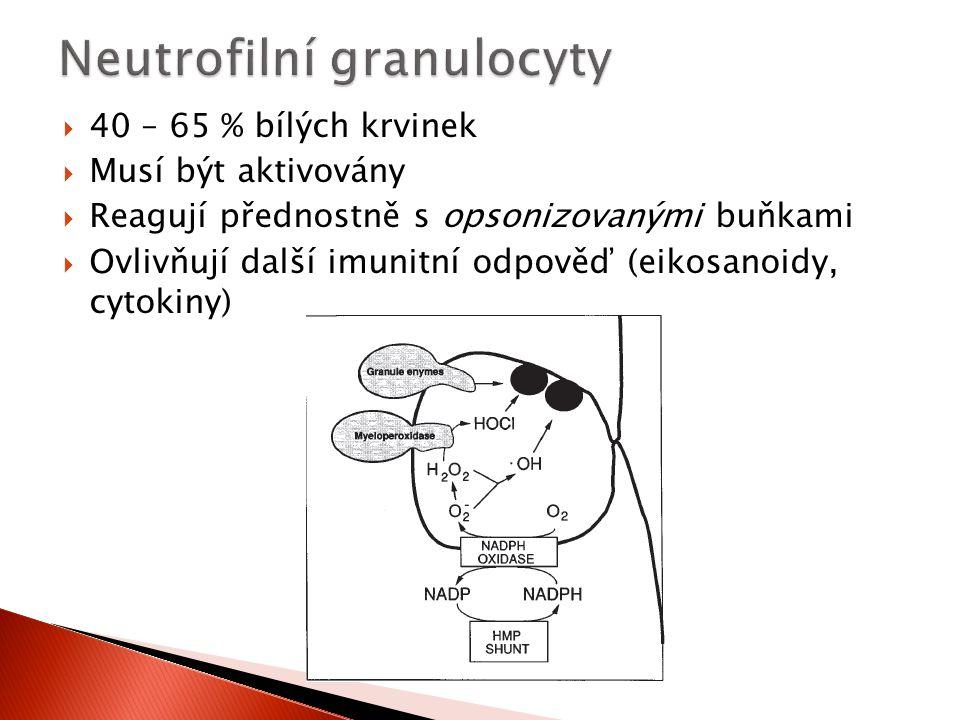  40 – 65 % bílých krvinek  Musí být aktivovány  Reagují přednostně s opsonizovanými buňkami  Ovlivňují další imunitní odpověď (eikosanoidy, cytoki