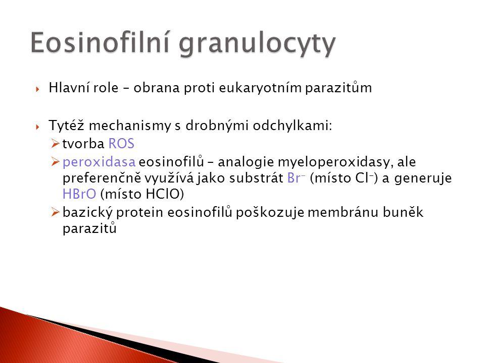  Hlavní role – obrana proti eukaryotním parazitům  Tytéž mechanismy s drobnými odchylkami:  tvorba ROS  peroxidasa eosinofilů – analogie myelopero