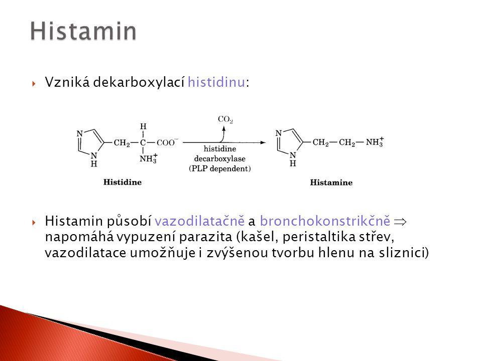  Vzniká dekarboxylací histidinu:  Histamin působí vazodilatačně a bronchokonstrikčně  napomáhá vypuzení parazita (kašel, peristaltika střev, vazodi