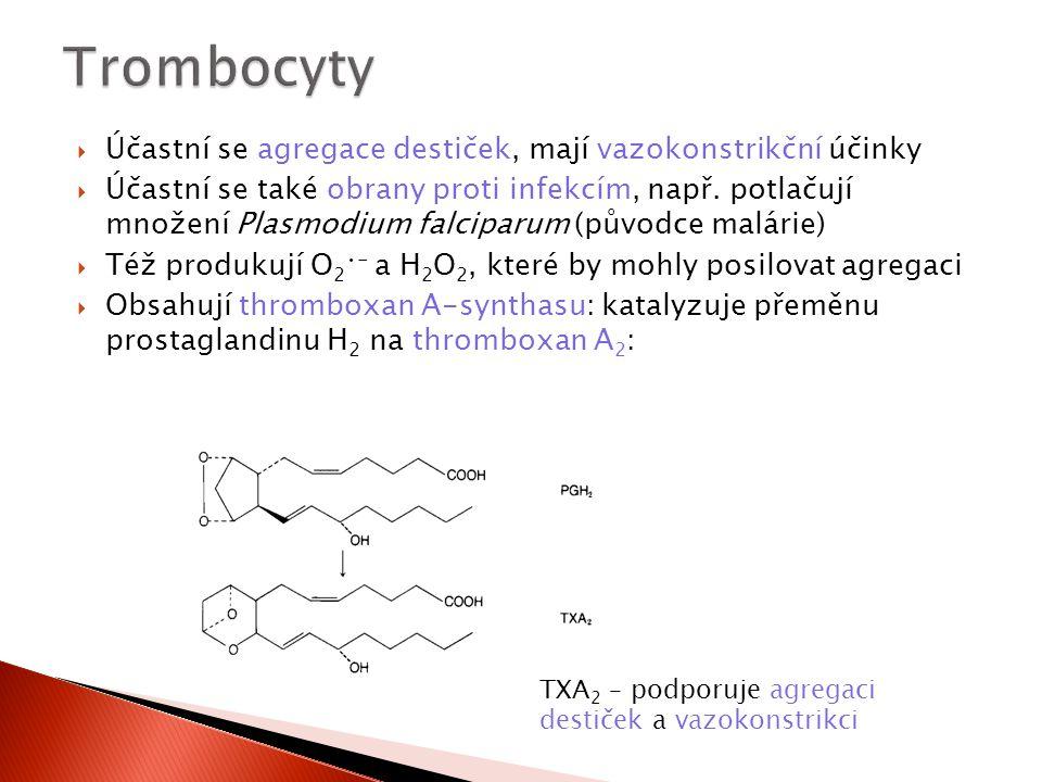  Účastní se agregace destiček, mají vazokonstrikční účinky  Účastní se také obrany proti infekcím, např. potlačují množení Plasmodium falciparum (pů