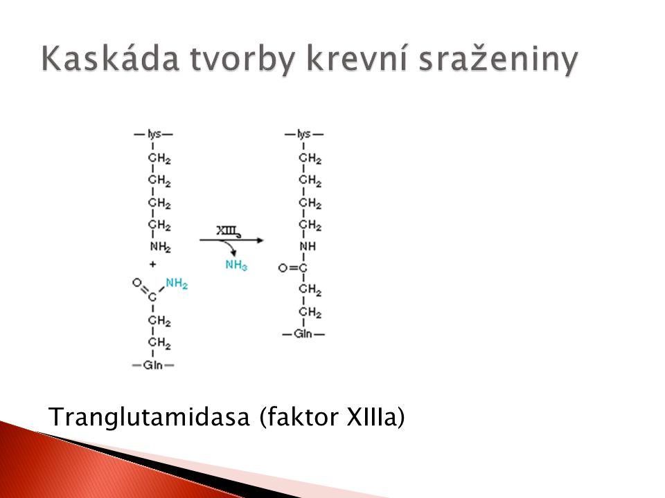 Tranglutamidasa (faktor XIIIa)