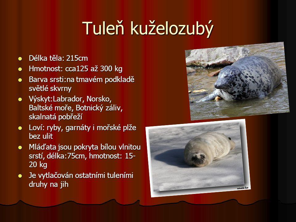Tuleň kuželozubý Délka těla: 215cm Délka těla: 215cm Hmotnost: cca125 až 300 kg Hmotnost: cca125 až 300 kg Barva srsti:na tmavém podkladě světlé skvrn