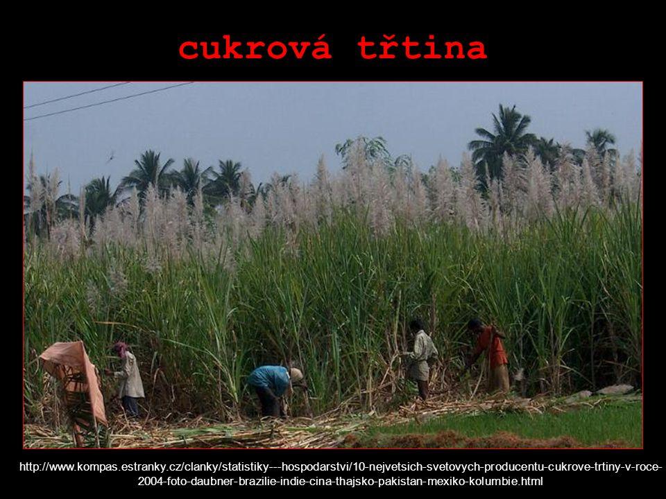cukrová třtina http://www.kompas.estranky.cz/clanky/statistiky---hospodarstvi/10-nejvetsich-svetovych-producentu-cukrove-trtiny-v-roce- 2004-foto-daubner-brazilie-indie-cina-thajsko-pakistan-mexiko-kolumbie.html