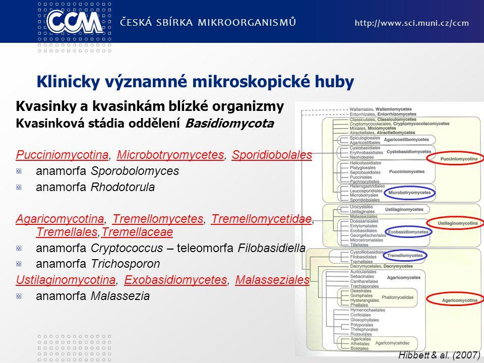 Klinicky významné mikroskopické huby Kvasinky a kvasinkám blízké organizmy Kvasinková stádia oddělení Basidiomycota PucciniomycotinaPucciniomycotina, Microbotryomycetes, SporidiobolalesMicrobotryomycetesSporidiobolales anamorfa Sporobolomyces anamorfa Rhodotorula AgaricomycotinaAgaricomycotina, Tremellomycetes, Tremellomycetidae, Tremellales,TremellaceaeTremellomycetesTremellomycetidae TremellalesTremellaceae anamorfa Cryptococcus – teleomorfa Filobasidiella anamorfa Trichosporon UstilaginomycotinaUstilaginomycotina, Exobasidiomycetes, MalassezialesExobasidiomycetesMalasseziales anamorfa Malassezia ČESKÁ SBÍRKA MIKROORGANISMŮ http://www.sci.muni.cz/ccm Hibbett & al.