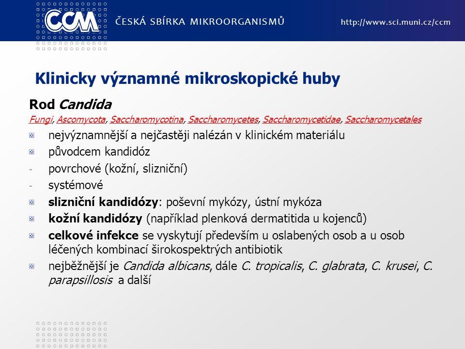 Klinicky významné mikroskopické huby Rod Candida FungiFungi, Ascomycota, Saccharomycotina, Saccharomycetes, Saccharomycetidae, SaccharomycetalesAscomy