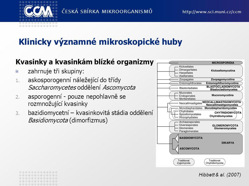 Klinicky významné mikroskopické huby Kvasinky a kvasinkám blízké organizmy zahrnuje tři skupiny: 1. askosporogenní náležející do třídy Saccharomycetes