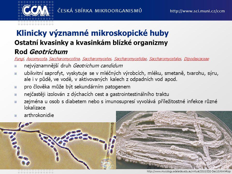 Klinicky významné mikroskopické huby Ostatní kvasinky a kvasinkám blízké organizmy Rod Geotrichum FungiFungi, Ascomycota, Saccharomycotina, Saccharomycetes, Saccharomycetidae, Saccharomycetales, DipodascaceaeAscomycotaSaccharomycotinaSaccharomycetesSaccharomycetidaeSaccharomycetalesDipodascaceae nejvýznamnější druh Geotrichum candidum ubikvitní saprofyt, vyskytuje se v mléčných výrobcích, mléku, smetaně, tvarohu, sýru, ale i v půdě, ve vodě, v aktivovaných kalech z odpadních vod apod.