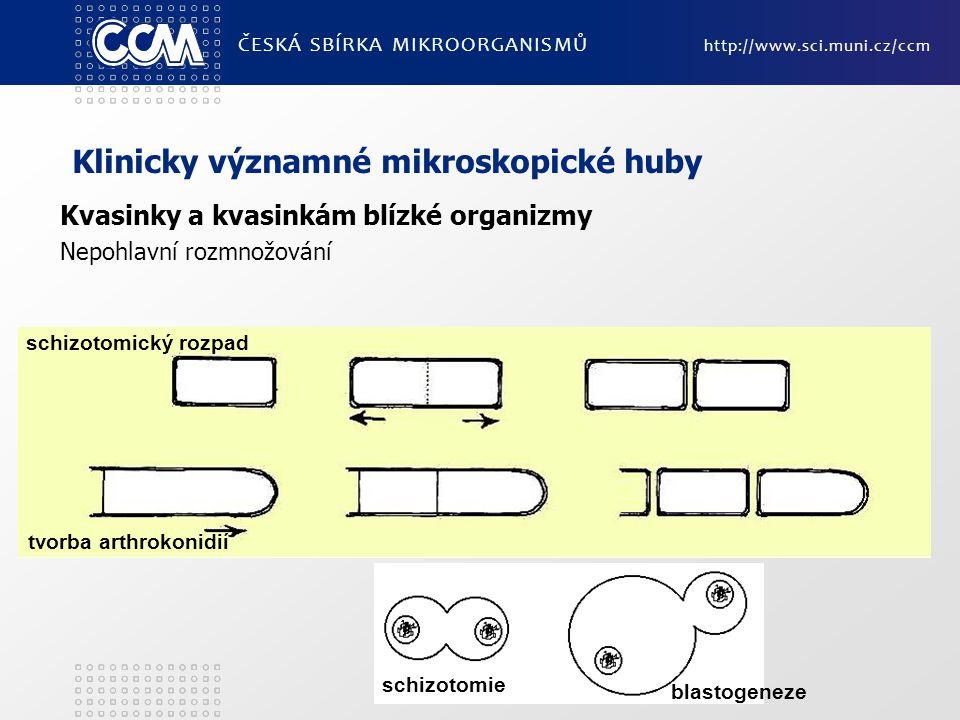 Klinicky významné mikroskopické huby Kvasinky a kvasinkám blízké organizmy Nepohlavní rozmnožování ČESKÁ SBÍRKA MIKROORGANISMŮ http://www.sci.muni.cz/ccm schizotomický rozpad tvorba arthrokonidií blastogeneze schizotomie