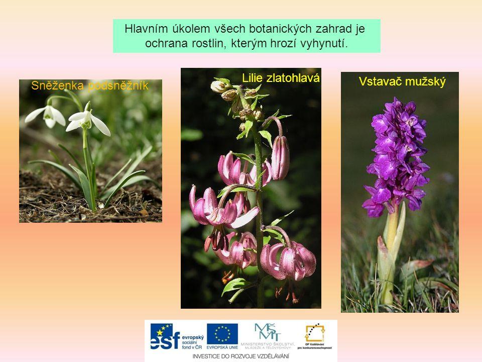 Hlavním úkolem všech botanických zahrad je ochrana rostlin, kterým hrozí vyhynutí. Sněženka podsněžník Vstavač mužský Lilie zlatohlavá