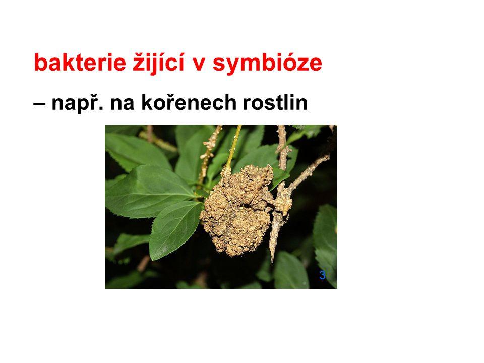 bakterie žijící v symbióze – např. na kořenech rostlin 3