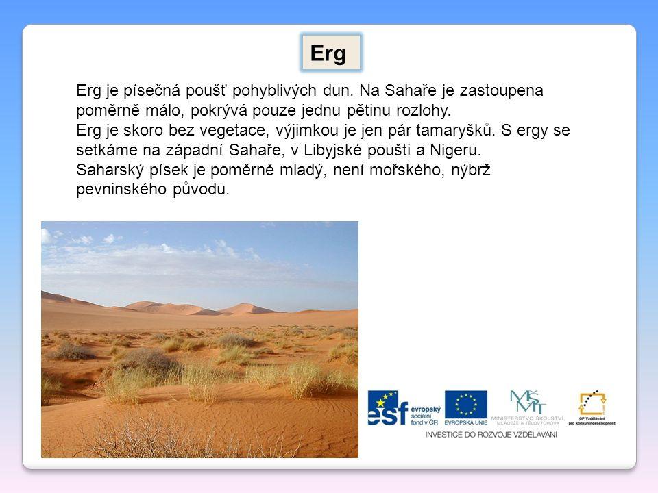 Erg je písečná poušť pohyblivých dun. Na Sahaře je zastoupena poměrně málo, pokrývá pouze jednu pětinu rozlohy. Erg je skoro bez vegetace, výjimkou je