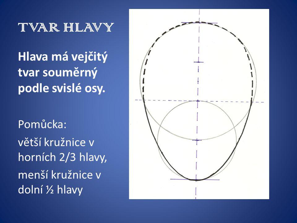 TVAR HLAVY Hlava má vejčitý tvar souměrný podle svislé osy. Pomůcka: větší kružnice v horních 2/3 hlavy, menší kružnice v dolní ½ hlavy