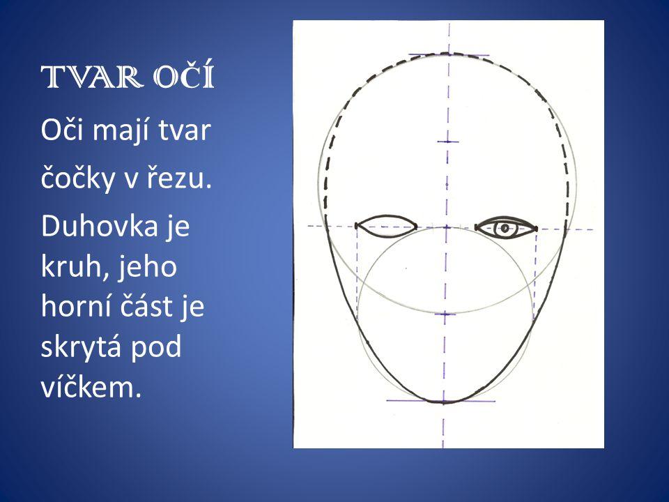 TVAR O Č Í Oči mají tvar čočky v řezu. Duhovka je kruh, jeho horní část je skrytá pod víčkem.