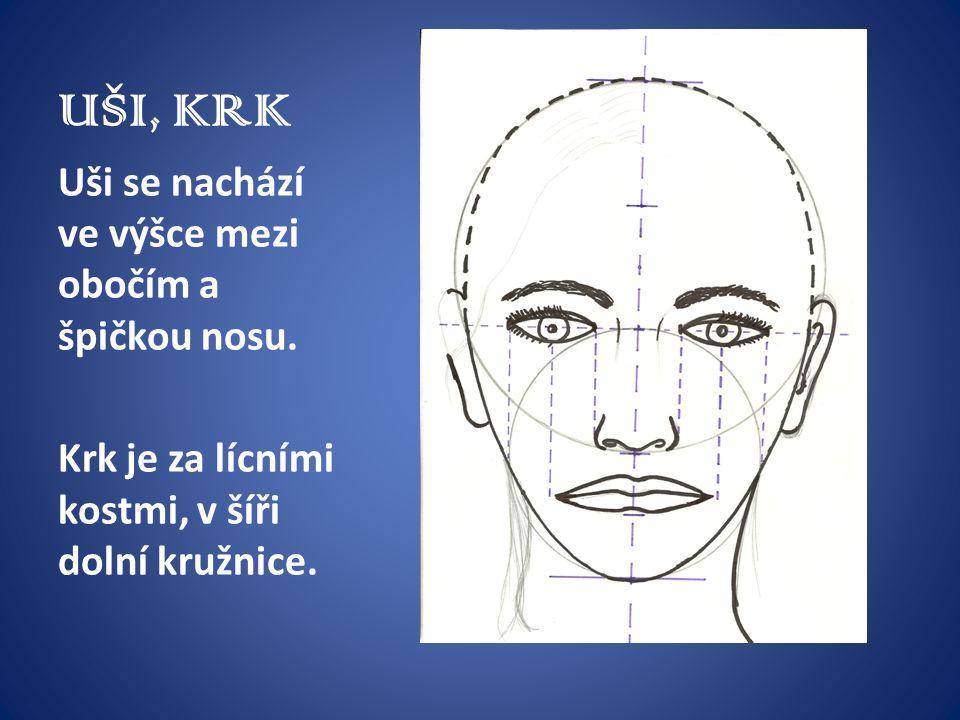 UŠI, KRK Uši se nachází ve výšce mezi obočím a špičkou nosu. Krk je za lícními kostmi, v šíři dolní kružnice.