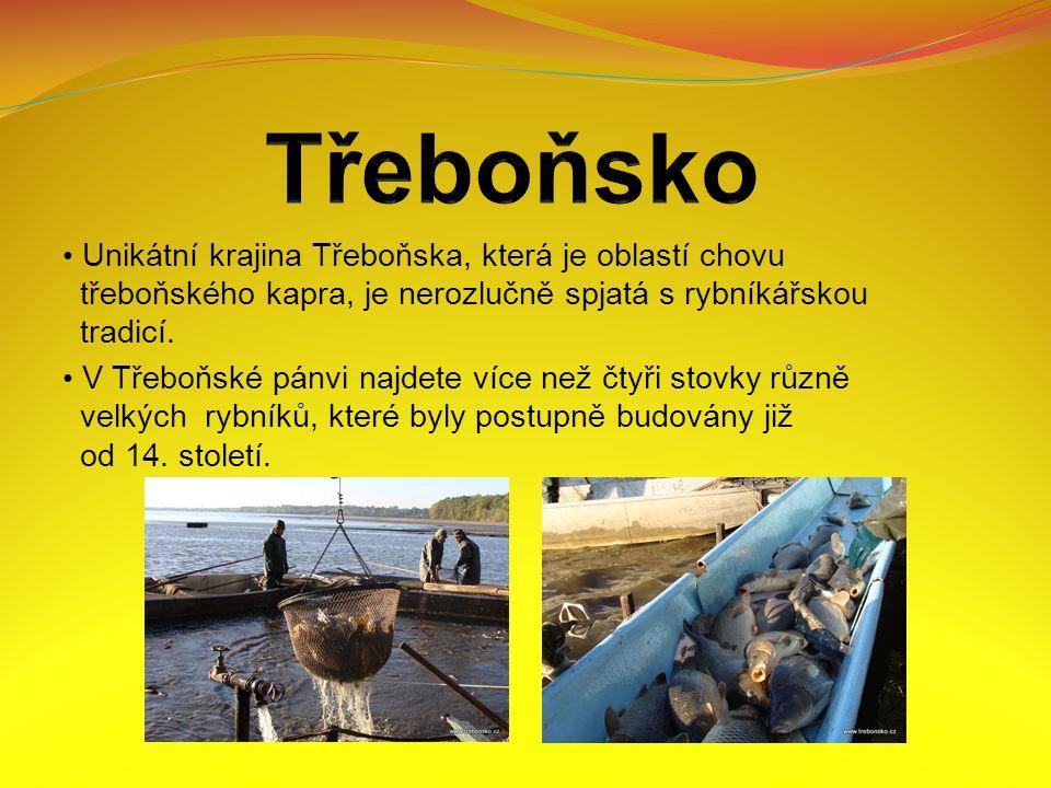 Unikátní krajina Třeboňska, která je oblastí chovu třeboňského kapra, je nerozlučně spjatá s rybníkářskou tradicí.