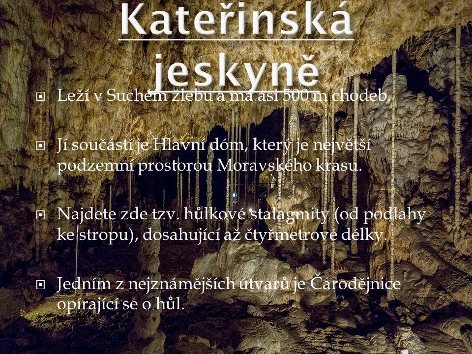  Leží v Suchém žlebu a má asi 500 m chodeb.  Jí součástí je Hlavní dóm, který je největší podzemní prostorou Moravského krasu.  Najdete zde tzv. hů