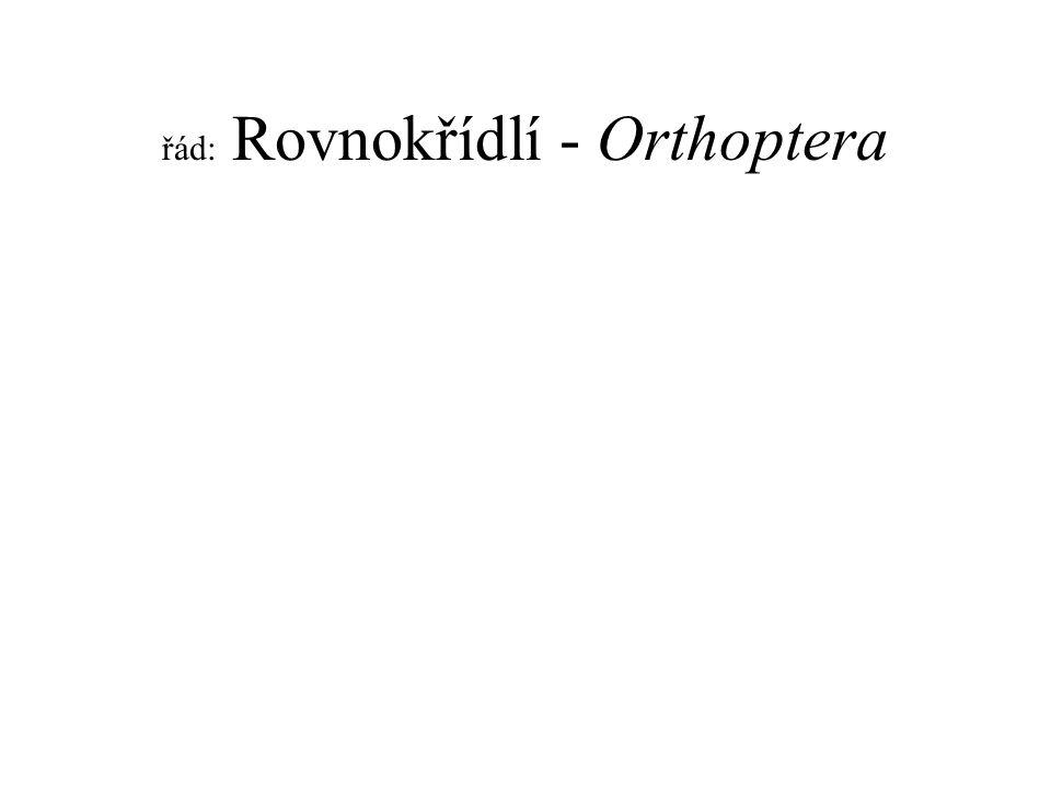 řád: Rovnokřídlí - Orthoptera