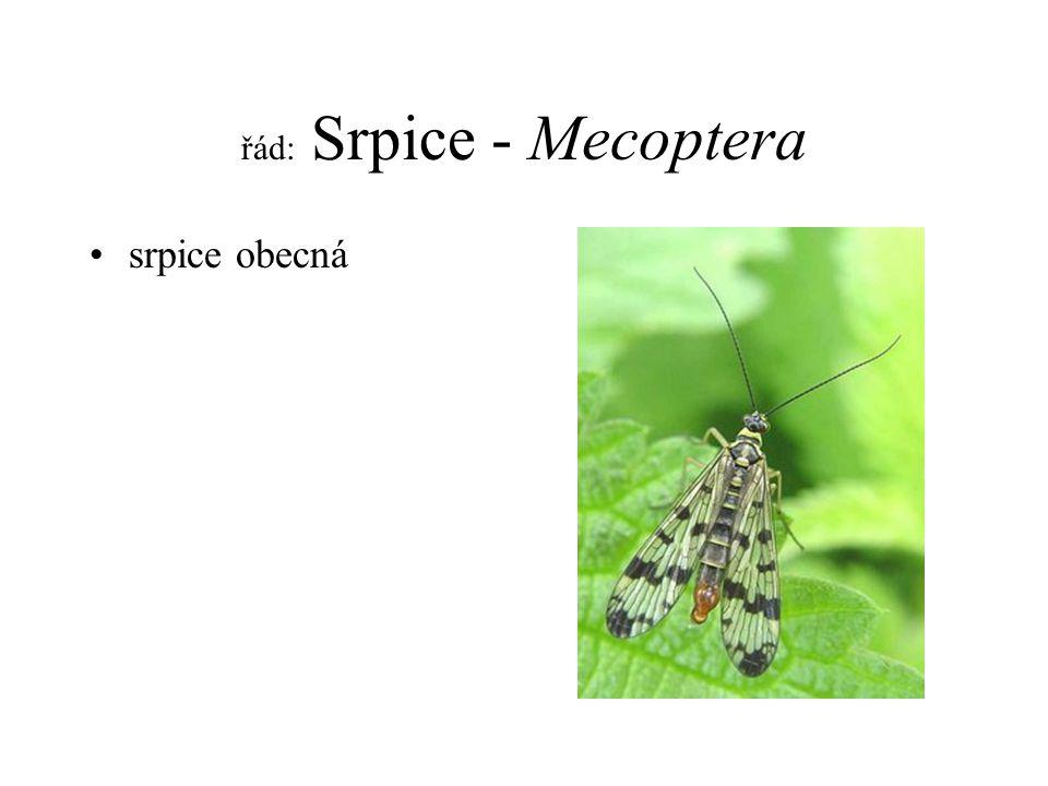 řád: Srpice - Mecoptera srpice obecná