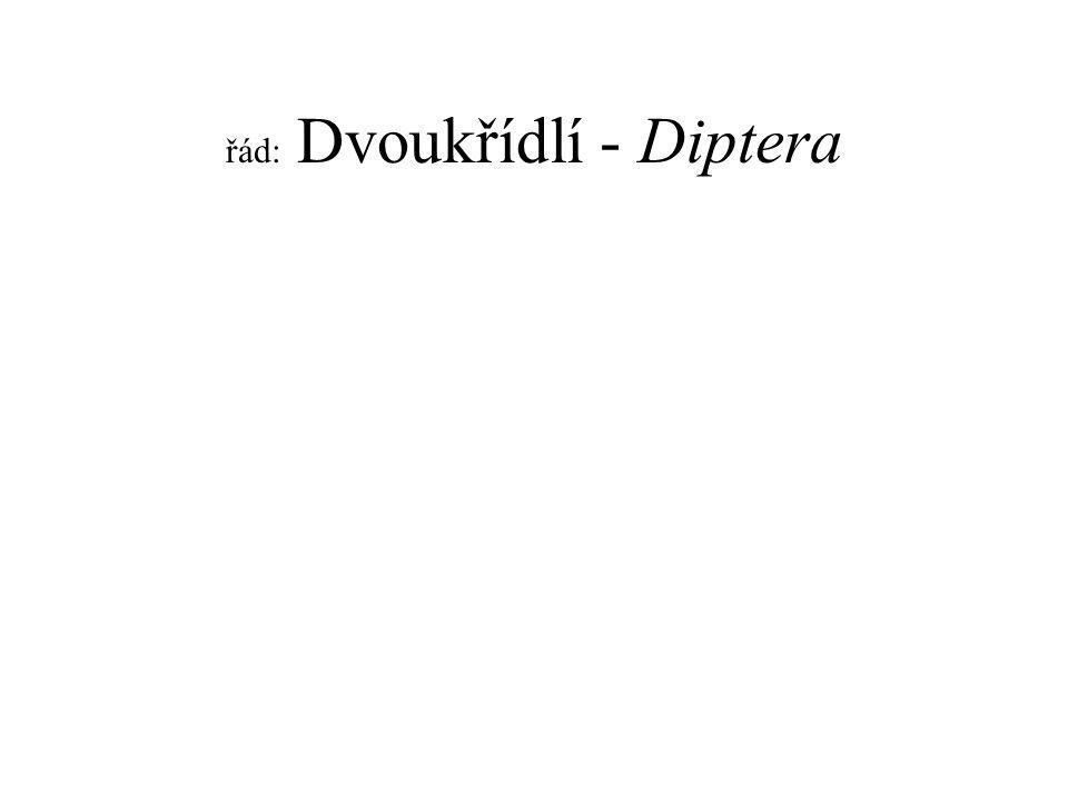 řád: Dvoukřídlí - Diptera