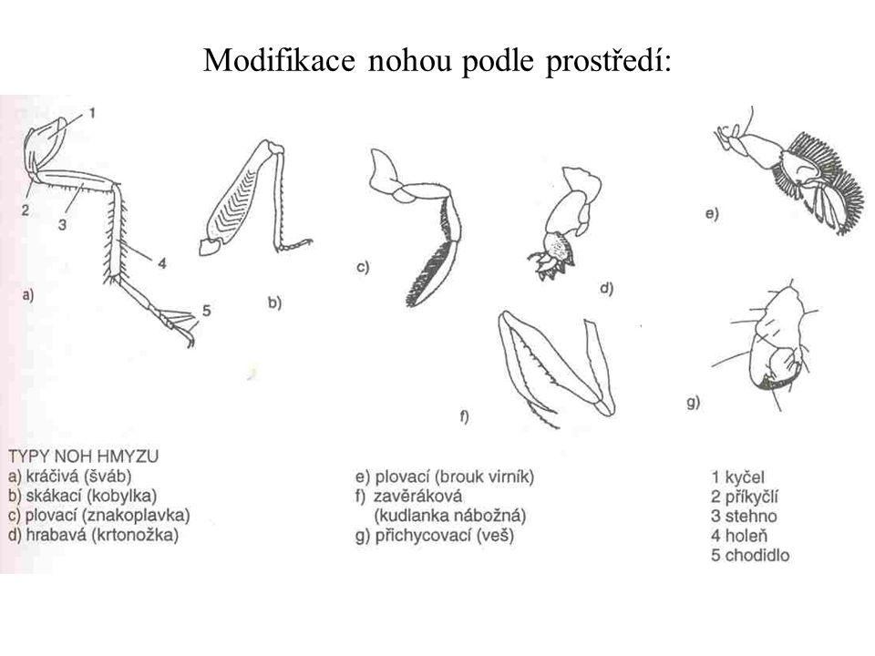 Modifikace nohou podle prostředí: