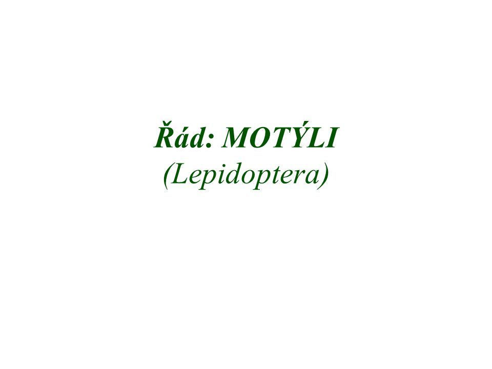 Řád: MOTÝLI (Lepidoptera)