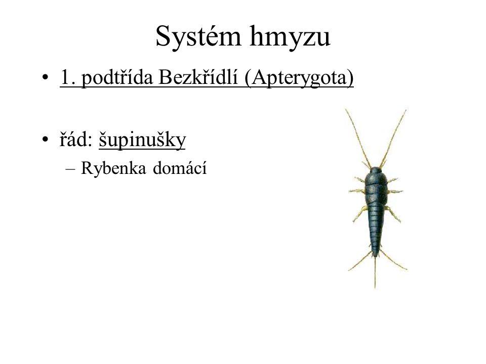 Systém hmyzu 1. podtřída Bezkřídlí (Apterygota) řád: šupinušky –Rybenka domácí