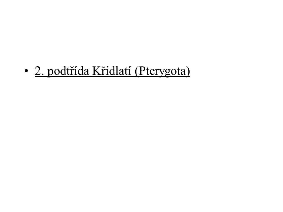2. podtřída Křídlatí (Pterygota)