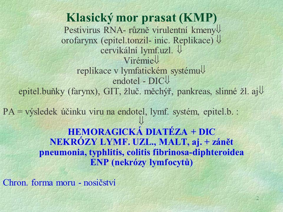 3 Aujeszkého choroba (pseudorabies) Herpesvirus  nazální, perorální, perkutánní infekce  dystrofie-nekróza epitel.b.