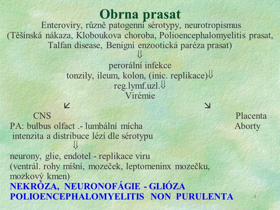 5 PRRS (porcine reproductive and respiratory syndrome) RNA arterivirus přenos inhalací, ingescí, koitem, morsus, iatrogenní; replikace v makrofázích sliznic a v plicních makrofázích virémie imunosuprese   subklinická inf.