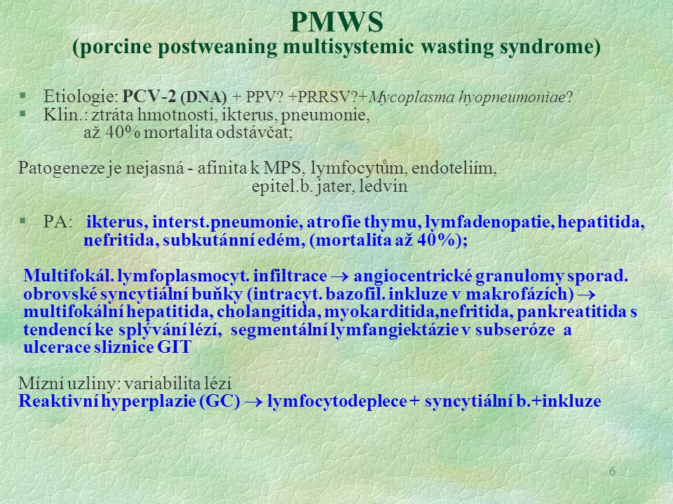 7 Červenka prasat Erysipelothrix rhusiopathiae (saprofyt GIT prasat - tonzily) ingesce, kožní trauma   endogenní infekce predispozice - imunosuprese  replikace bakterií  sepse  dystrofie endotelu DIC HEMORAGICKÁ DIATÉZA (event.