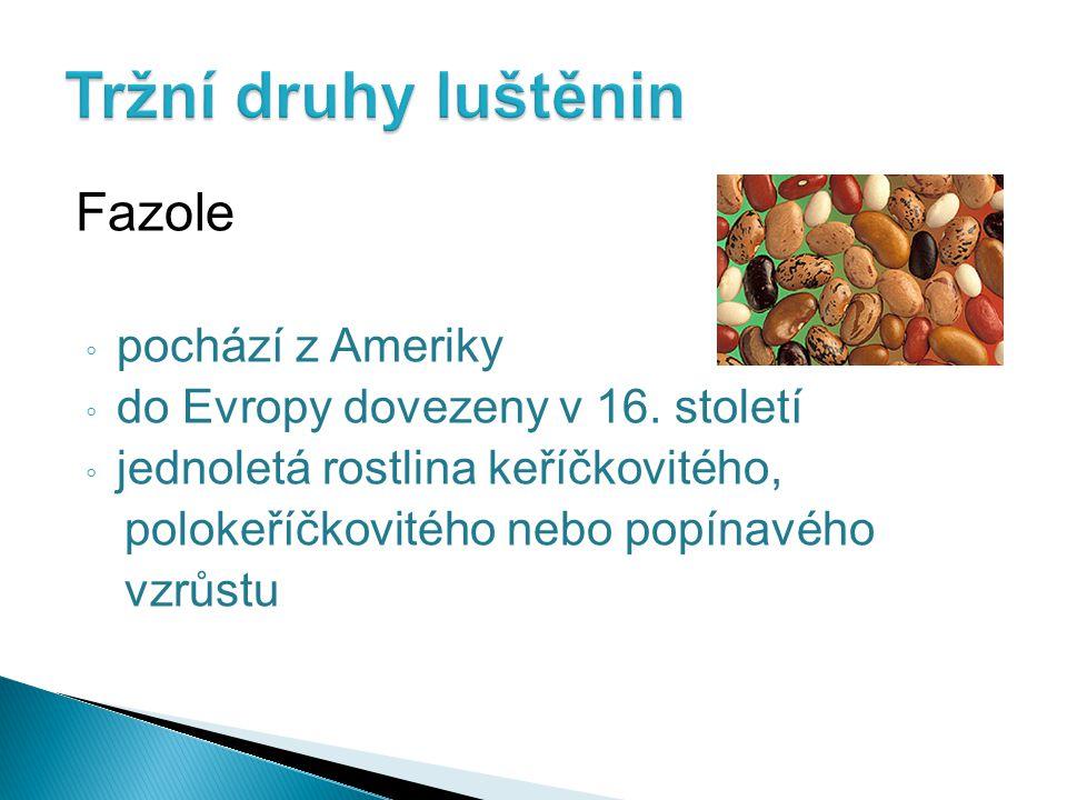 Fazole ◦ pochází z Ameriky ◦ do Evropy dovezeny v 16. století ◦ jednoletá rostlina keříčkovitého, polokeříčkovitého nebo popínavého vzrůstu