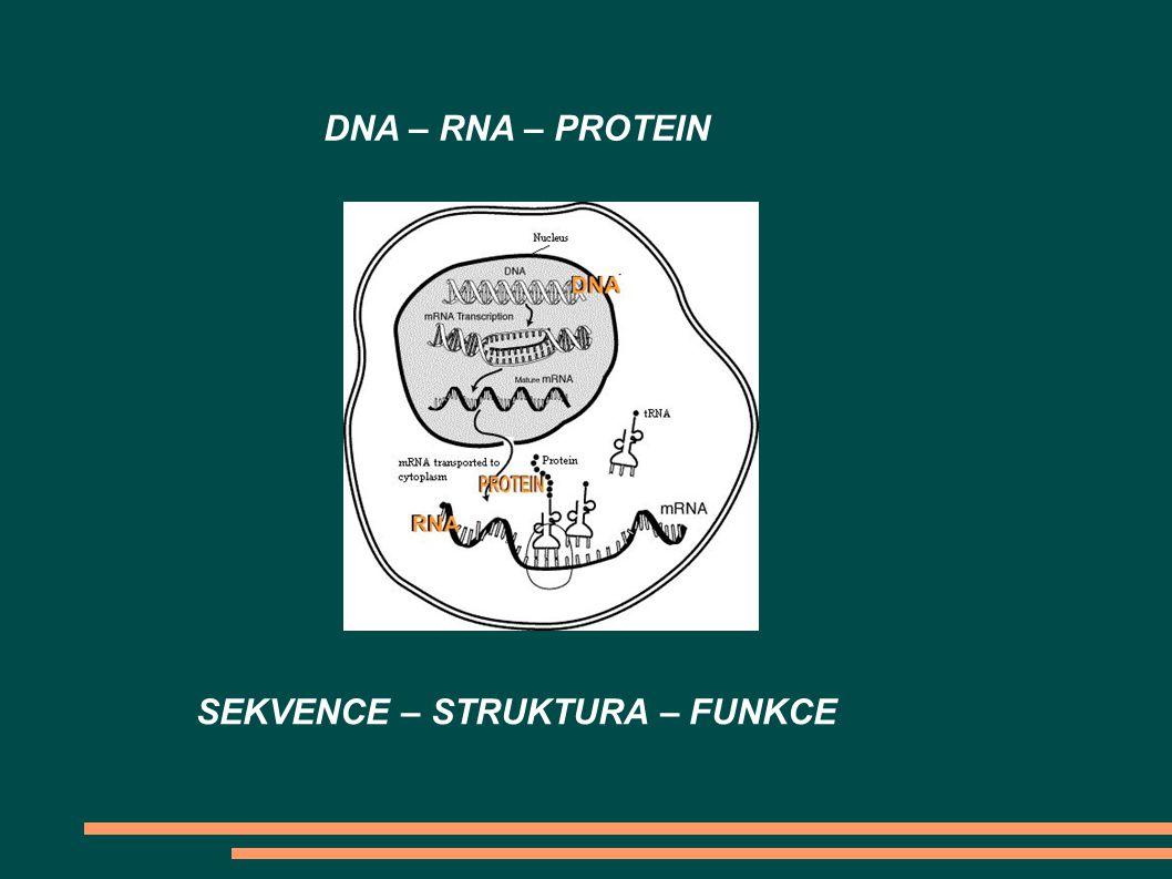 DNA – RNA – PROTEIN SEKVENCE – STRUKTURA – FUNKCE