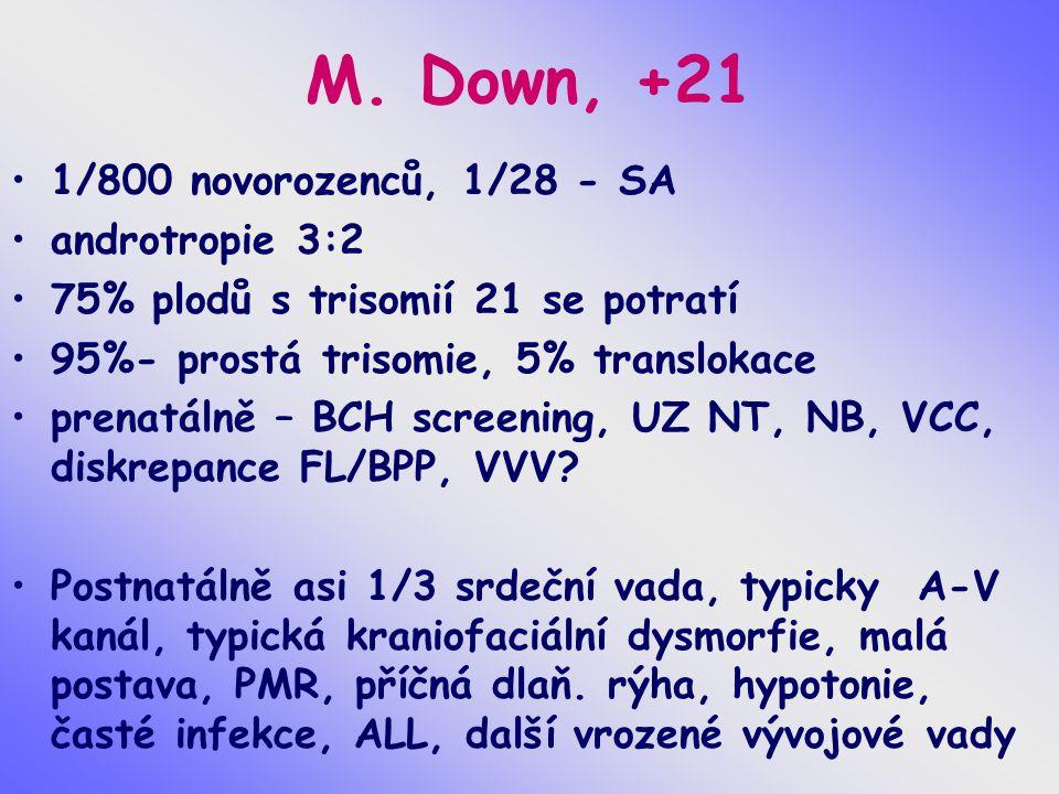 M. Down, +21 1/800 novorozenců, 1/28 - SA androtropie 3:2 75% plodů s trisomií 21 se potratí 95%- prostá trisomie, 5% translokace prenatálně – BCH scr
