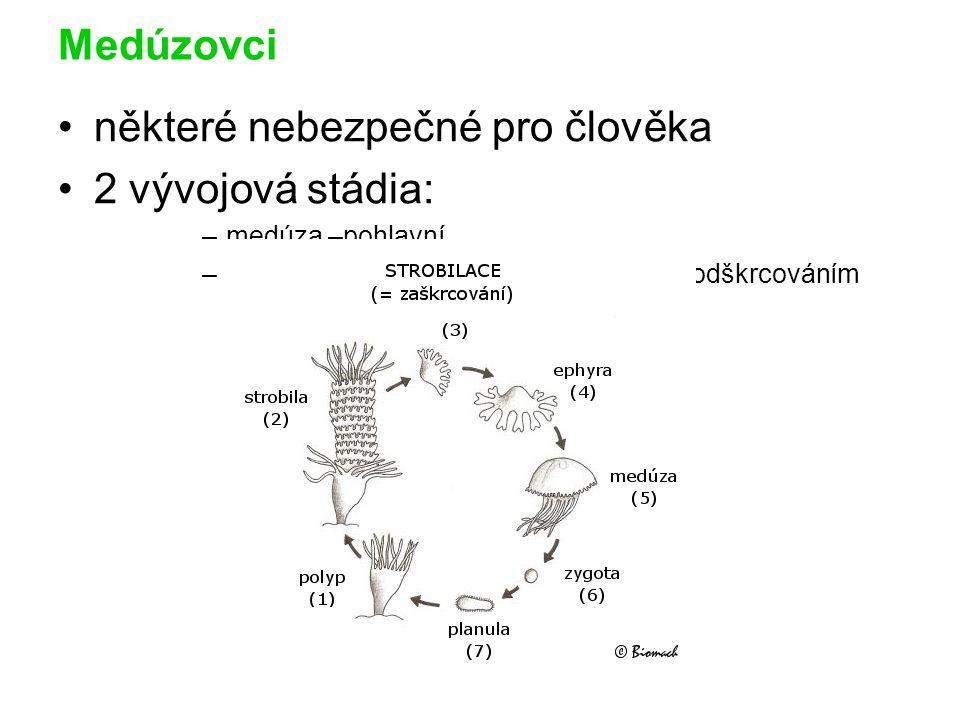 Medúzovci některé nebezpečné pro člověka 2 vývojová stádia: –medúza –pohlavní –polyp – nepohlavní –z něj vznik medúz odškrcováním