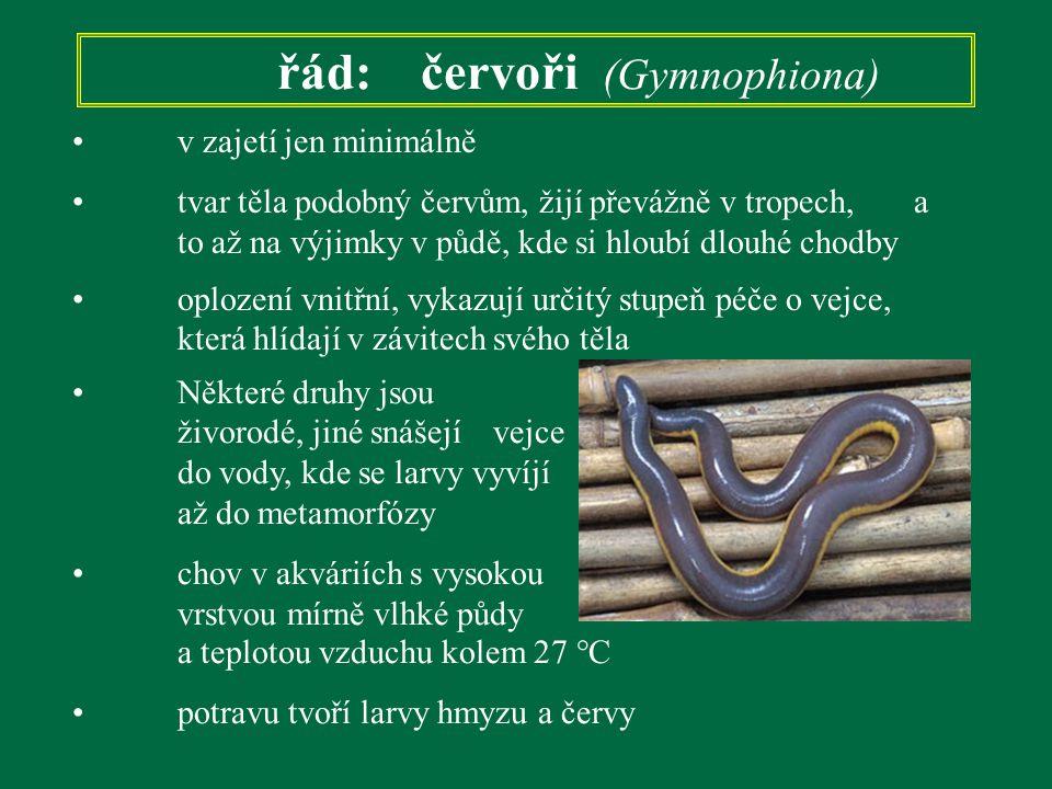 řád: červoři (Gymnophiona) v zajetí jen minimálně tvar těla podobný červům, žijí převážně v tropech, a to až na výjimky v půdě, kde si hloubí dlouhé c
