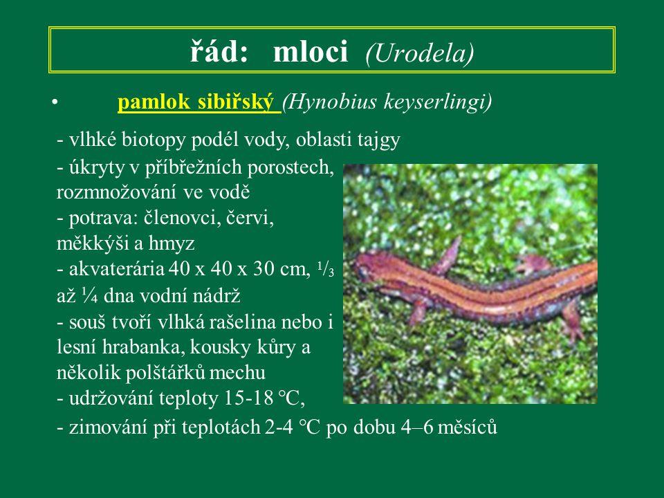 řád: mloci (Urodela) pamlok sibiřský (Hynobius keyserlingi) - úkryty v příbřežních porostech, rozmnožování ve vodě - potrava: členovci, červi, měkkýši