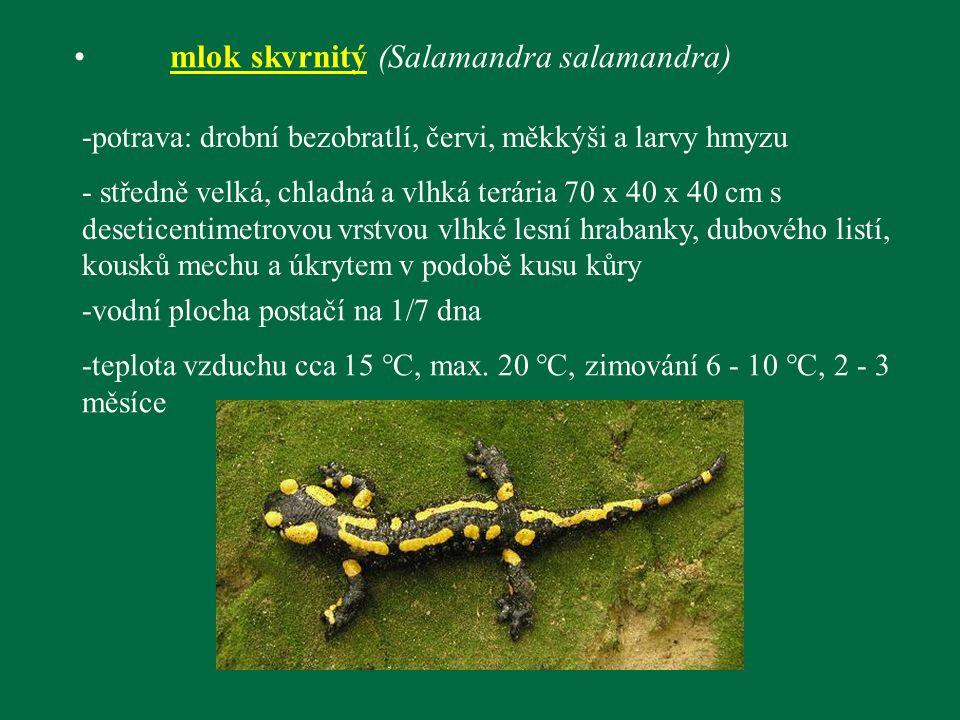 mlok skvrnitý (Salamandra salamandra) -potrava: drobní bezobratlí, červi, měkkýši a larvy hmyzu - středně velká, chladná a vlhká terária 70 x 40 x 40