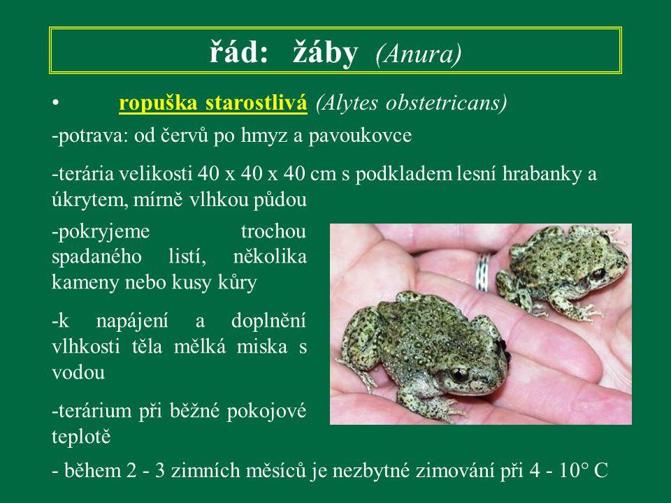 řád: žáby (Anura) ropuška starostlivá (Alytes obstetricans) -potrava: od červů po hmyz a pavoukovce -terária velikosti 40 x 40 x 40 cm s podkladem les
