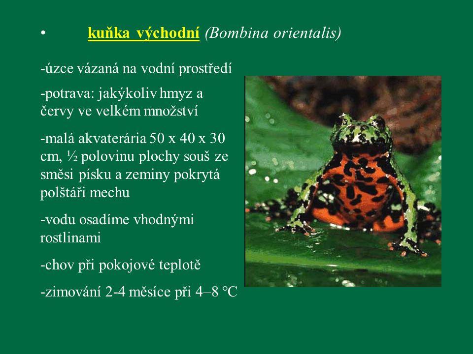 kuňka východní (Bombina orientalis) -úzce vázaná na vodní prostředí -potrava: jakýkoliv hmyz a červy ve velkém množství -malá akvaterária 50 x 40 x 30