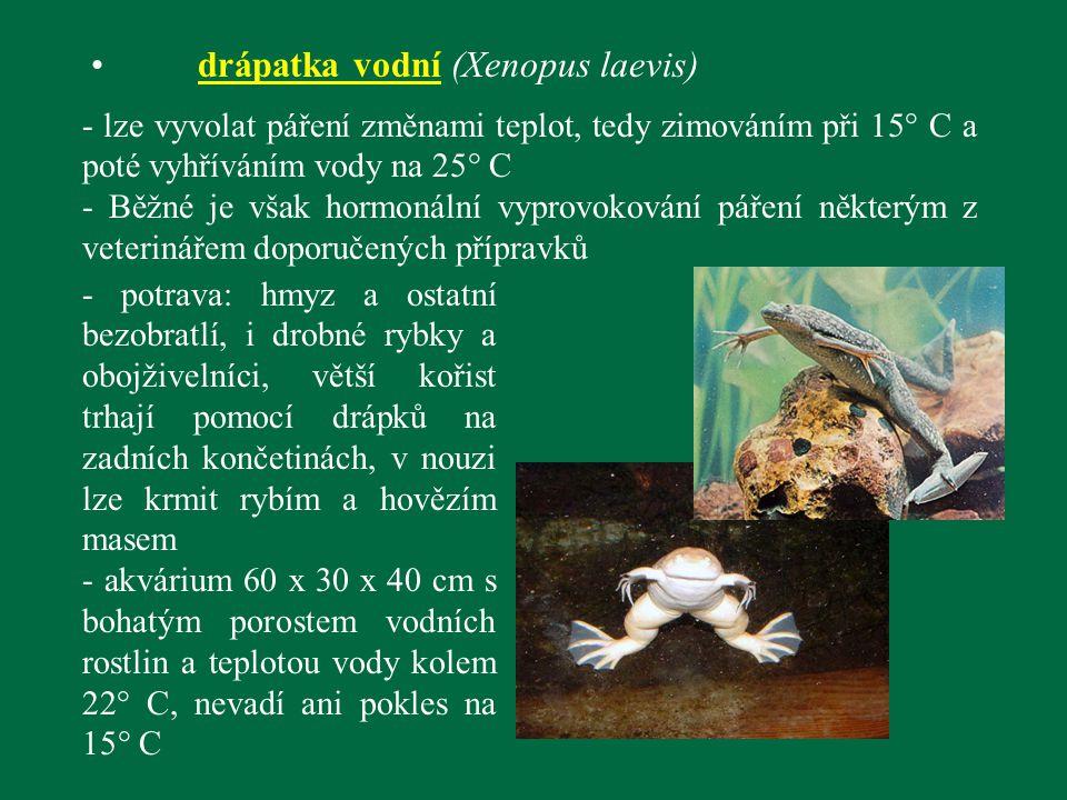 drápatka vodní (Xenopus laevis) - lze vyvolat páření změnami teplot, tedy zimováním při 15° C a poté vyhříváním vody na 25° C - Běžné je však hormonál
