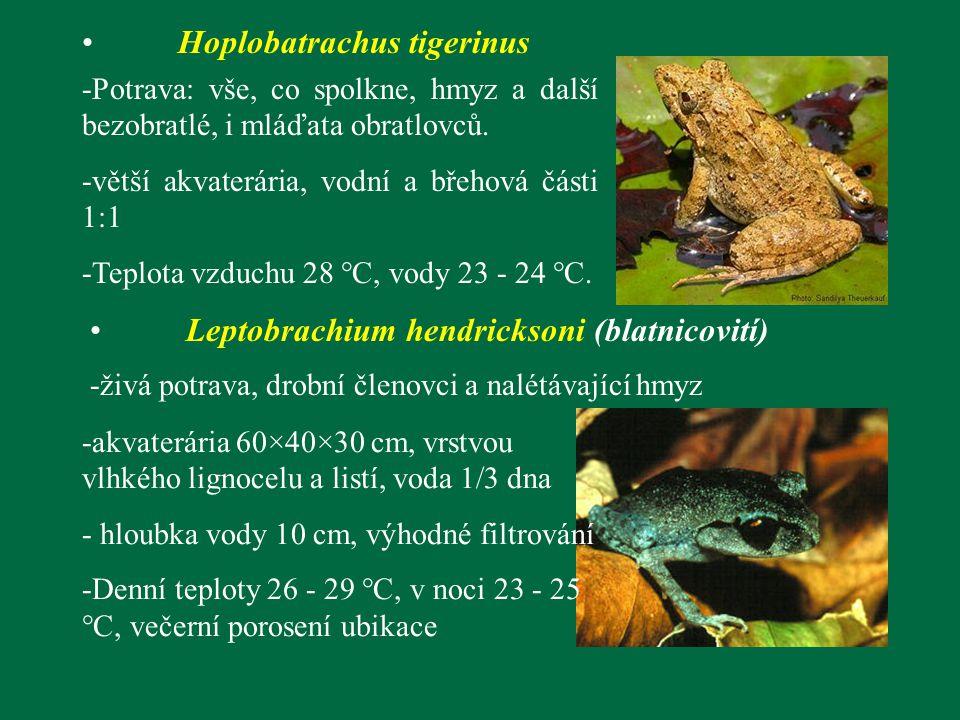 -Potrava: vše, co spolkne, hmyz a další bezobratlé, i mláďata obratlovců. -větší akvaterária, vodní a břehová části 1:1 -Teplota vzduchu 28 °C, vody 2