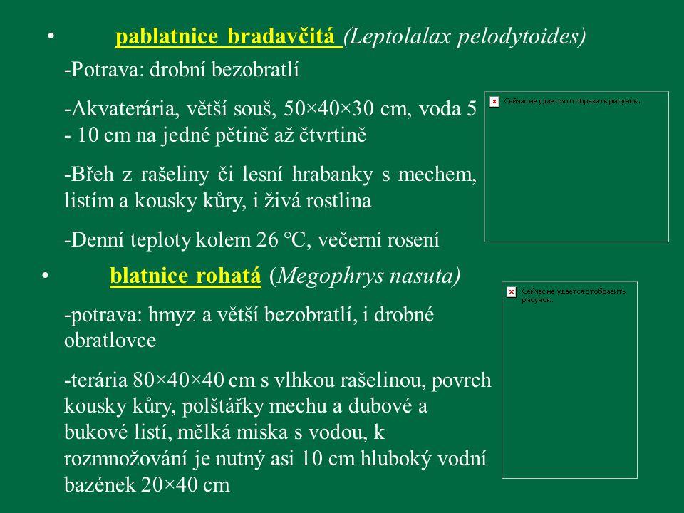 pablatnice bradavčitá (Leptolalax pelodytoides) -Potrava: drobní bezobratlí -Akvaterária, větší souš, 50×40×30 cm, voda 5 - 10 cm na jedné pětině až č