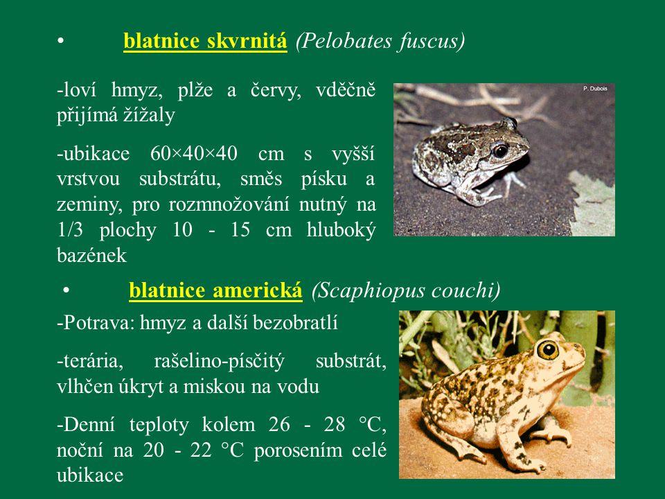 blatnice skvrnitá (Pelobates fuscus) -loví hmyz, plže a červy, vděčně přijímá žížaly -ubikace 60×40×40 cm s vyšší vrstvou substrátu, směs písku a zemi