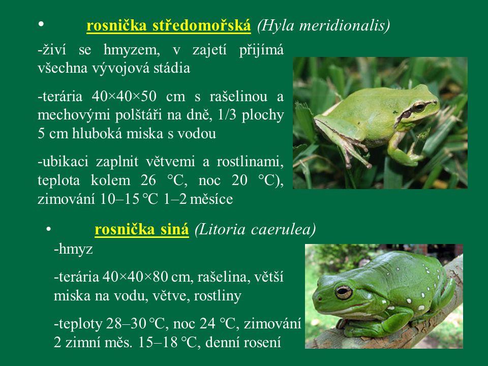 rosnička středomořská (Hyla meridionalis) -živí se hmyzem, v zajetí přijímá všechna vývojová stádia -terária 40×40×50 cm s rašelinou a mechovými polšt